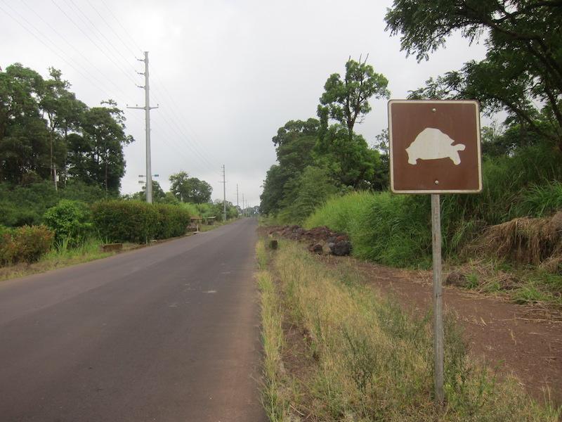 Galapagos Islands 5D - Tortoises Crossing.jpg