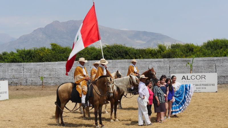 Peruvian Paso Horses - With Dancers