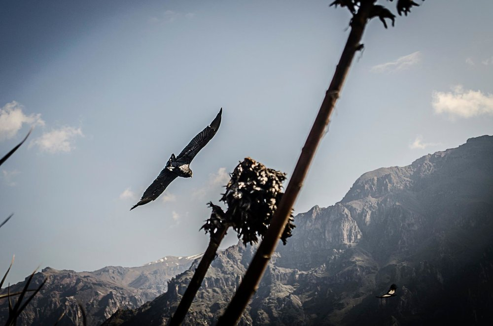 Smith, Stacey & Andrew - Colca Canyon5.jpg