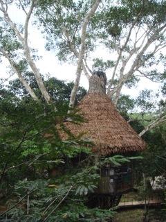 Morgan x 2 - Treehouse Lodge, Iquitos4.jpeg