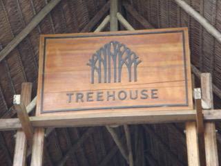Morgan x 2 - Treehouse Lodge, Iquitos1.jpeg