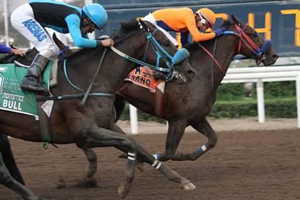 Horse Racing in Lima - Hipodromo de Monterrico8.jpg