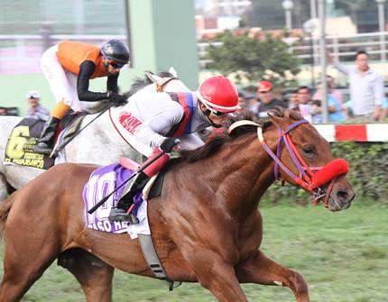 Horse Racing in Lima - Hipodromo de Monterrico10.jpg