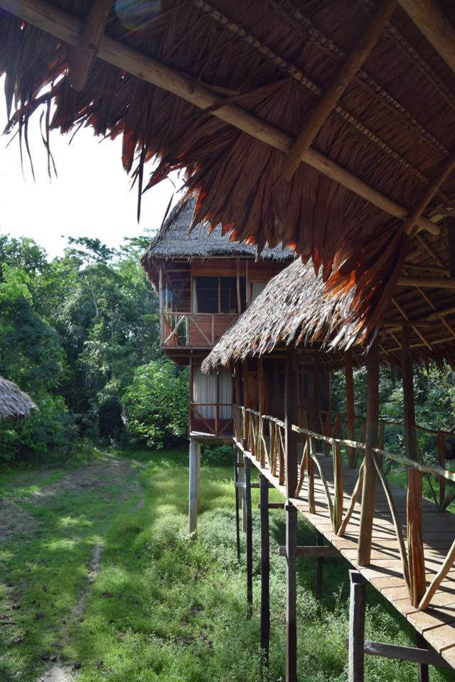 De Bruin x 2 - Tahuayo Lodge1.jpg