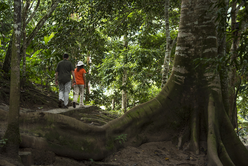 Amazon jungle trail at Pumarinri.