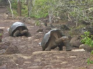Schneider, Gary x 4 - Ecuador & Galapagos8.jpg