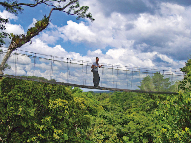 Canopy Walkway at  Explornapo ,  Loreto .