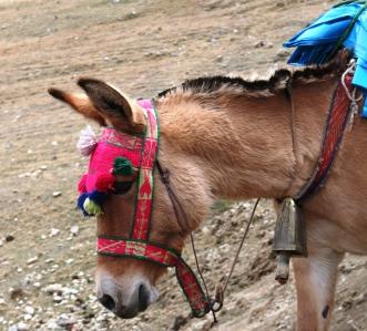 Santa Cruz Trek - Donkey.jpg