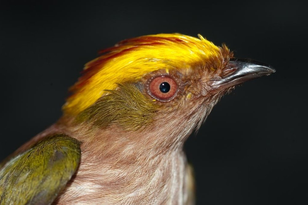 Northern Peru Birding Route 21D