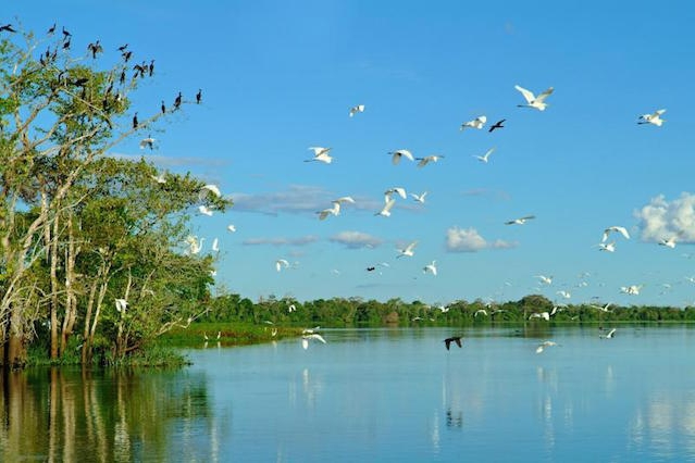 Amazon Lowlands Birding 4D