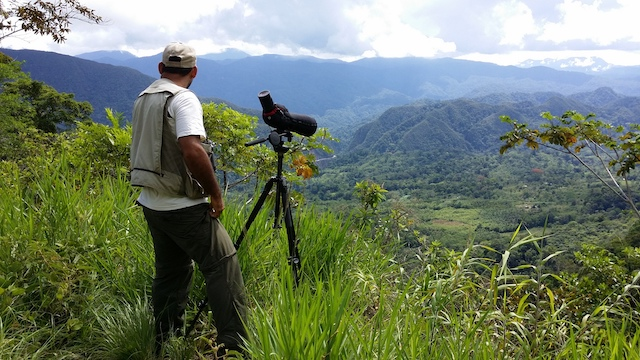 Henry looking out over a vista  Our Peru North guide Henry Pinedo was fantastic! He knew every bird and every bird call and could point out new and very cool birds everywhere we went!