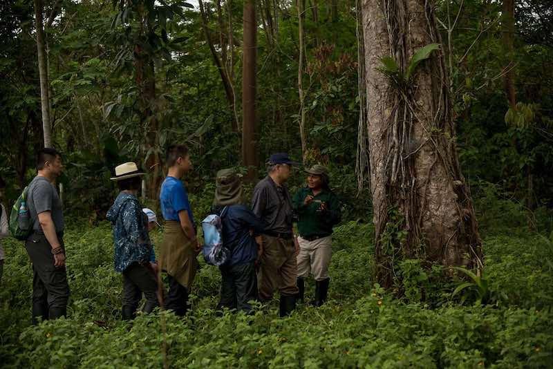 R & F Amazon Cruise - Jungle Walk.jpg