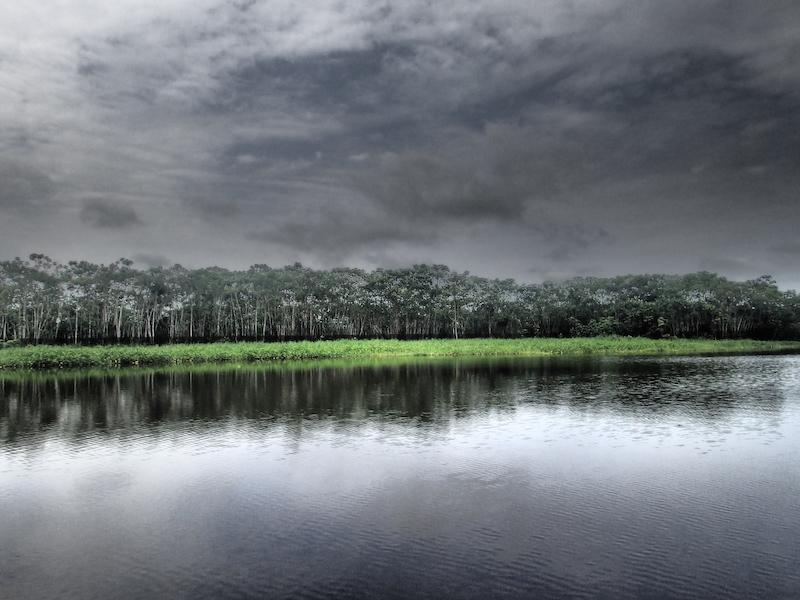 Mankoff x 6 - Spondias Testimonial - Brooding Amazon Sky.JPG