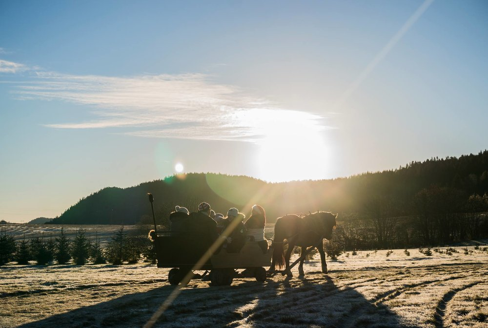 Skui gård hest og slede kanefart.jpg