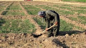 Image retrieved from  http://www.public-domain-image.com/free-images/people/male-men/kurdish-farmer-digging-earth-on-his-farm/attachment/kurdish-farmer-digging-earth-on-his-farm