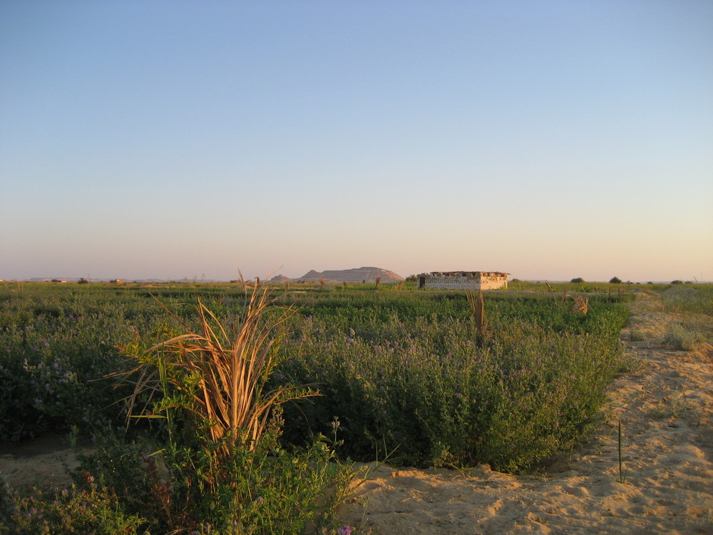 SIWA AT SUNRISE