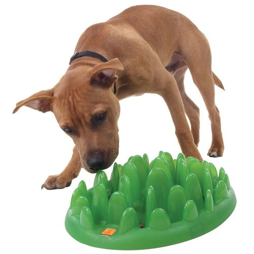 feeder plastic alert slow harmony dog shop deal small bowl navy