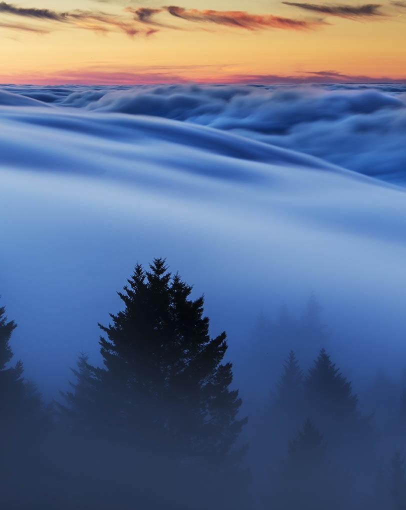 Mount Tam, Mount Tamalpais state park, Foggy, Bolinas ridge