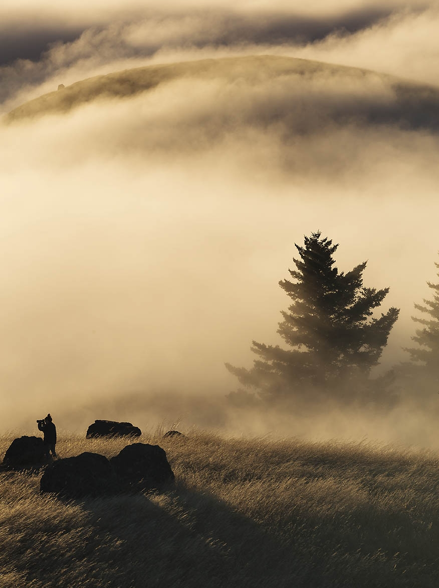 Mt. Tamalpais state park, Bolinas ridge, California, Marin County, Mill Valley
