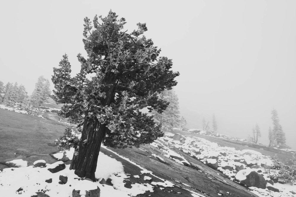 Yosemite summit  copy.jpg