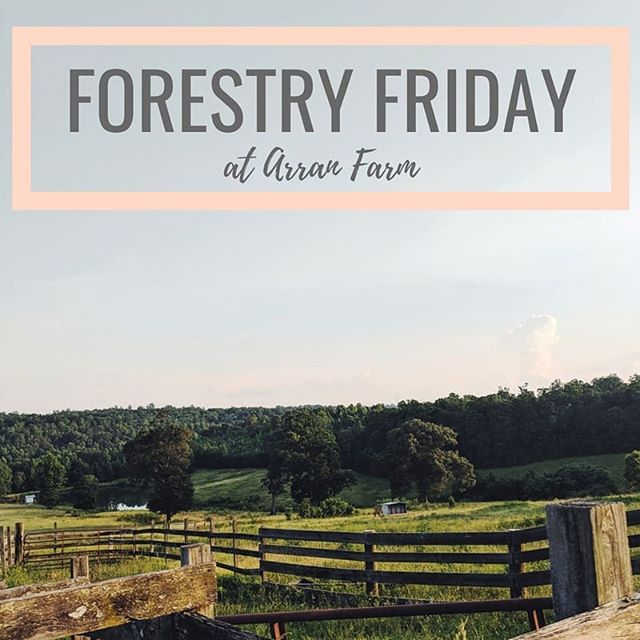 Wrap up your summer this Friday with @forestryfriday at the beautiful @arranfarm! Come listen to some tunes from 6-9pm (from yours truly) while you shop local goodies! We can't wait to see ya!