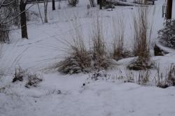 winterinterest.JPG