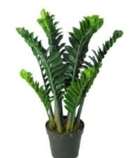 zeezee plant for article.jpg