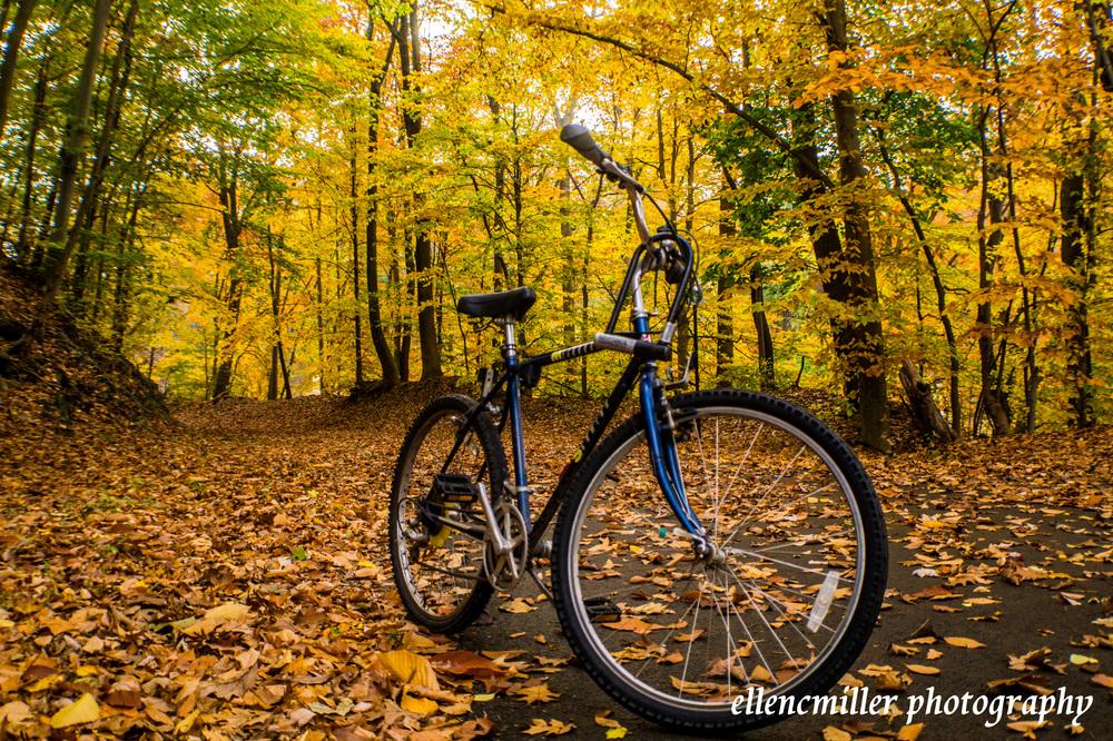 Cynwyd Heritage Trail