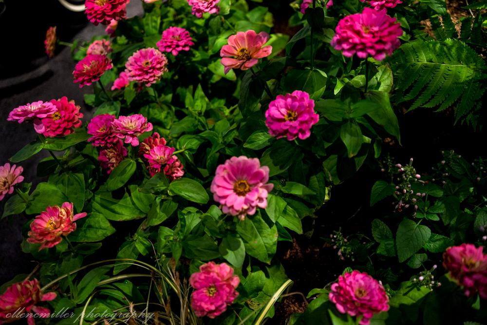 Phila Flower Show-15.jpg