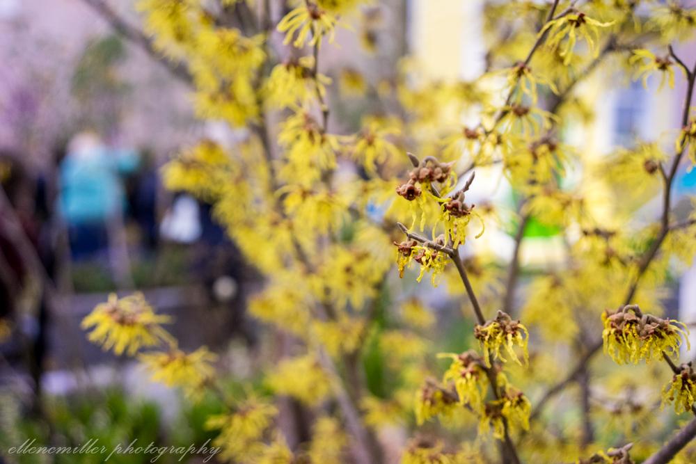 Phila Flower Show-30.jpg