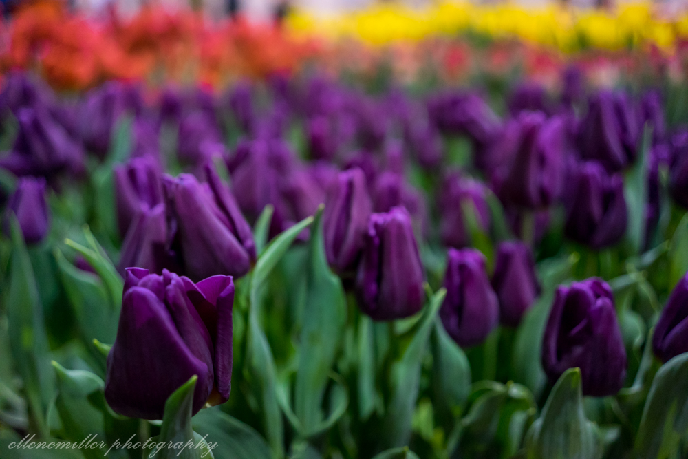 Phila Flower Show-43.jpg
