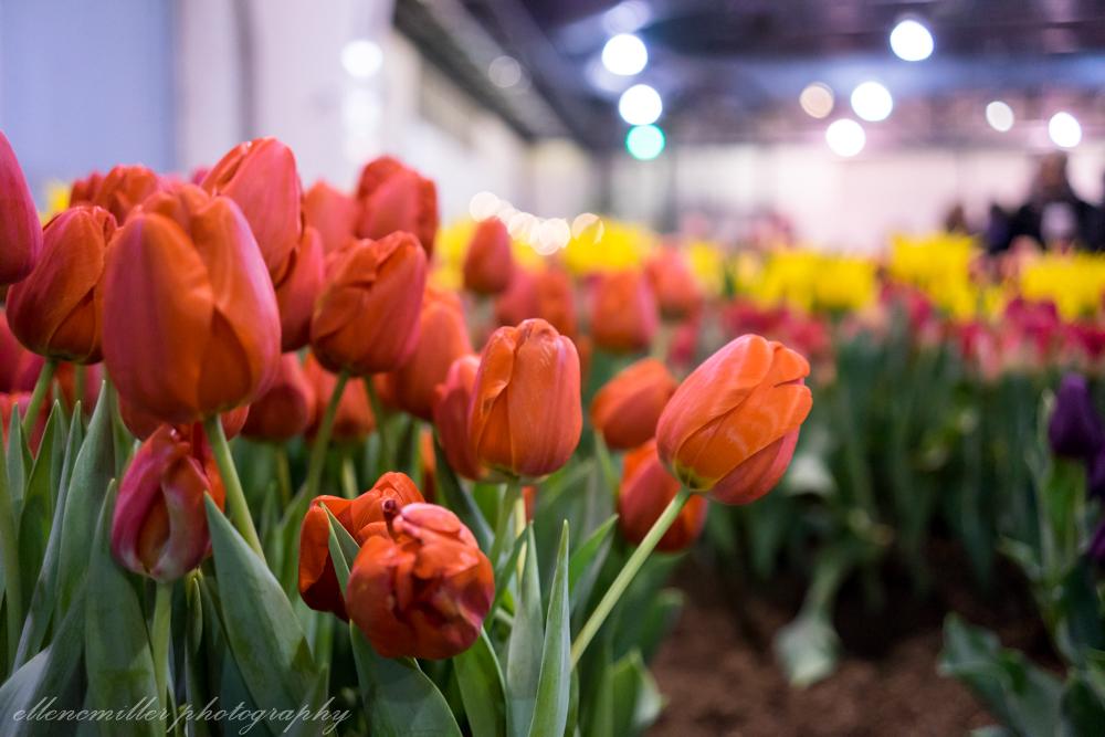 Phila Flower Show-45.jpg