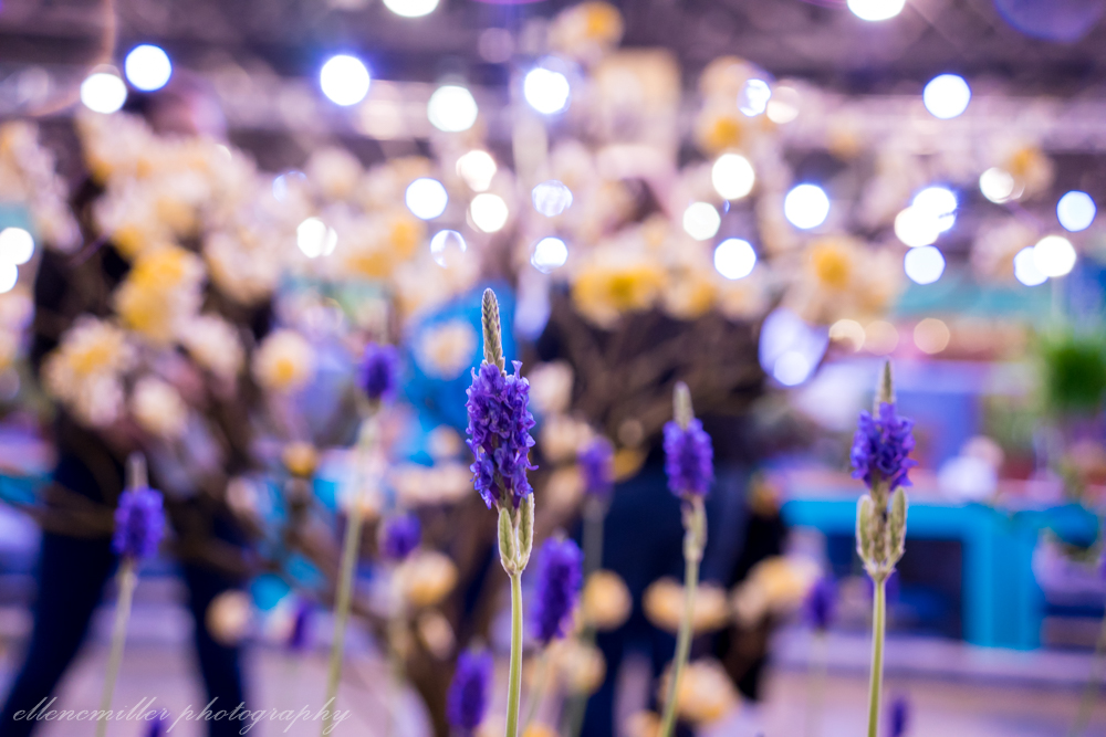 Phila Flower Show-98.jpg
