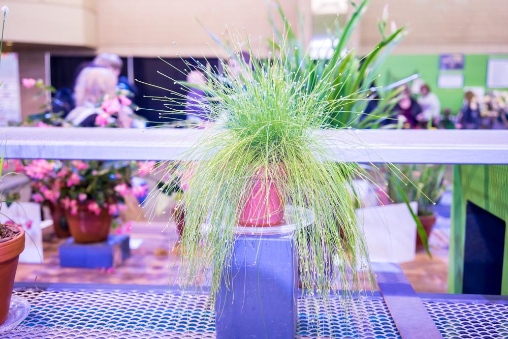 Phila Flower Show-99.jpg