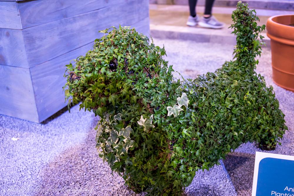 Plant Pup!