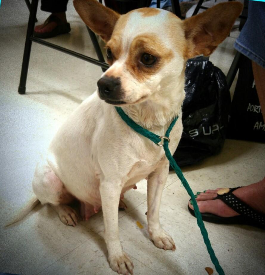 Dog-Adoption-Bradenton-2