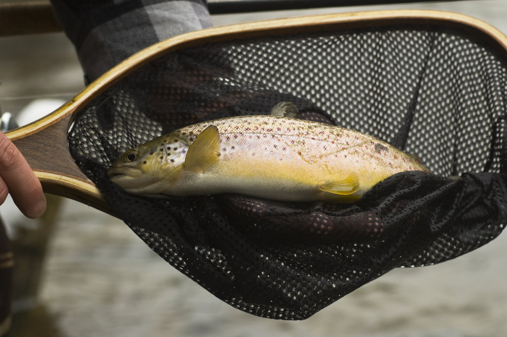 Colorado Fishing Violation Lawyer Nathaniel Gilbert