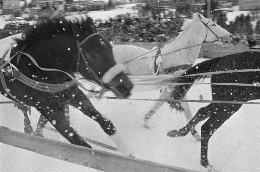 Horses Sleigh Racing