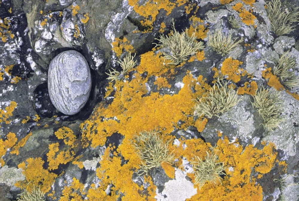 Lichen and Stone