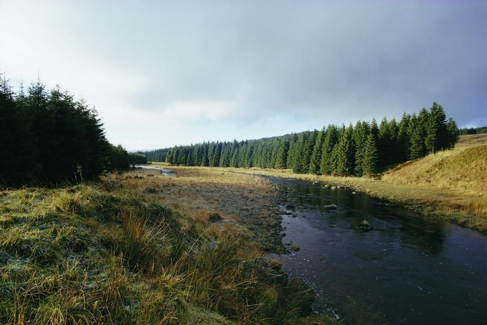 Kielder Forest