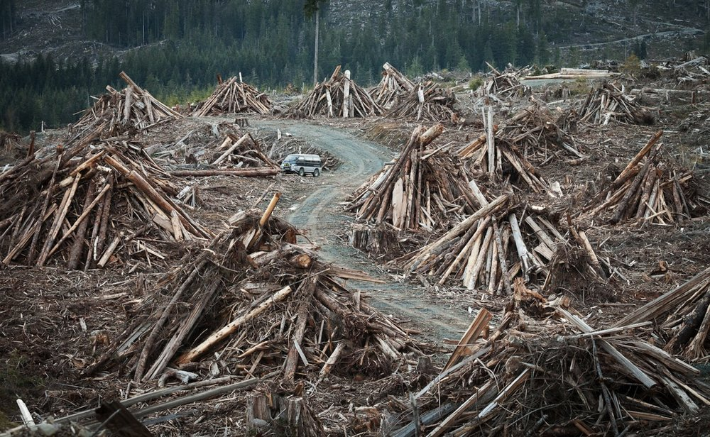 This photo by TJ Watt of the Ancient Forest Alliance shows TJ's van parked amongst massive piles of waste wood heaped into slash piles, waiting to be burned. Notice how small his van is relative to the wood piles.