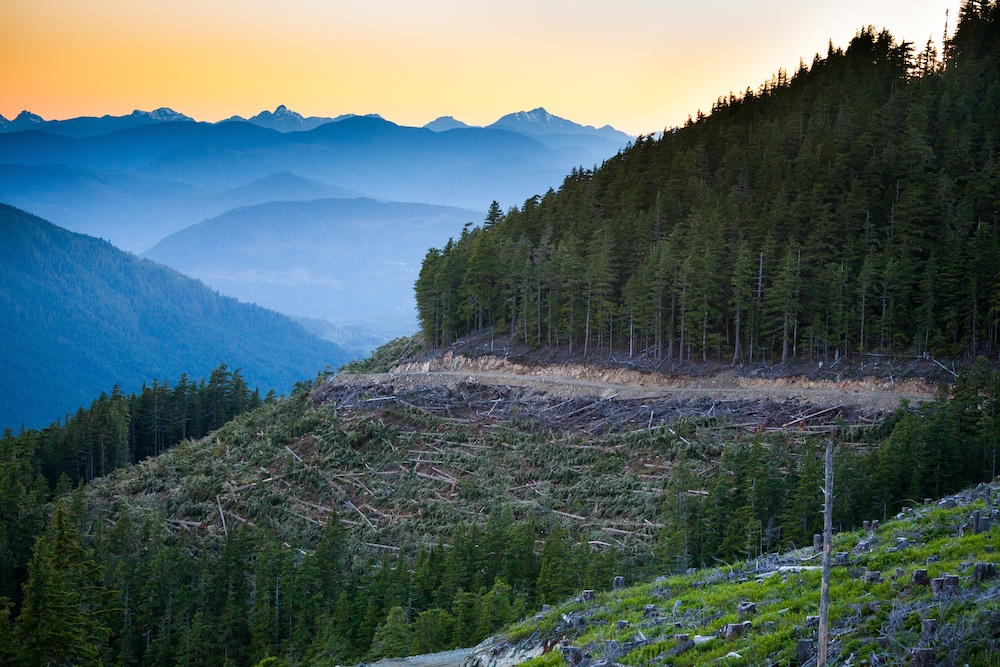 This image by TJ Watt of the Ancient Forest Alliance shows recent road-building and clear-cutting on the steep slopes of McLaughlin Ridge – the main drinking watershed for the CIty of Port Alberni and one of the last old-growth Douglas fir forests left anywhere on the south coast.