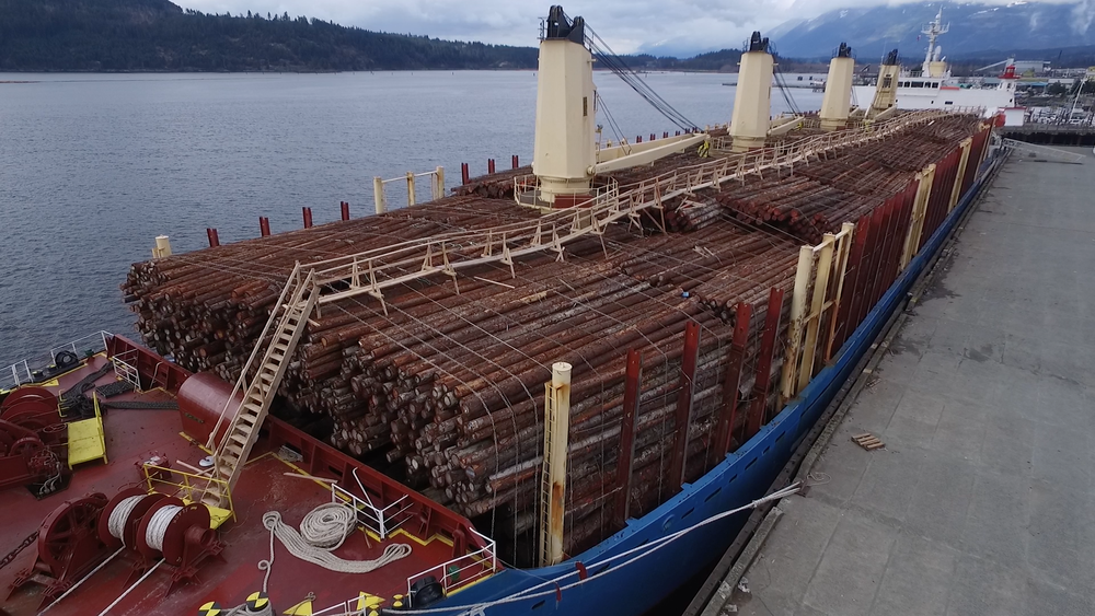 This image by TJ Watt of the Ancient Forest Alliance shows a log export ship docked in Port Alberni about to set sail with a full load of raw, unprocessed BC timber bound for foreign markets.