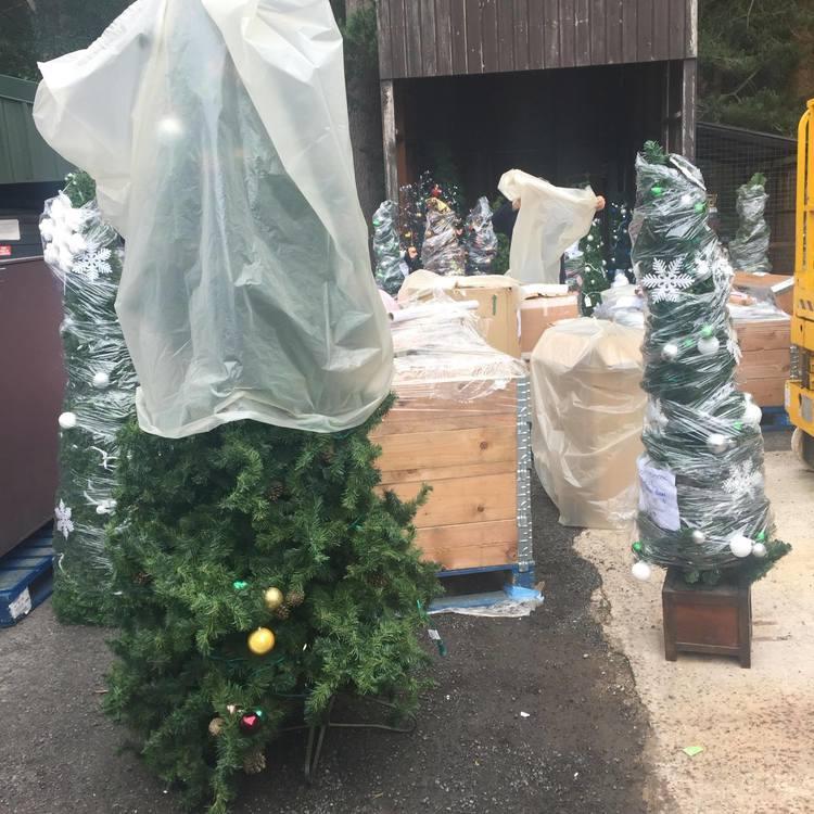 centerparcs christmas trees.jpg