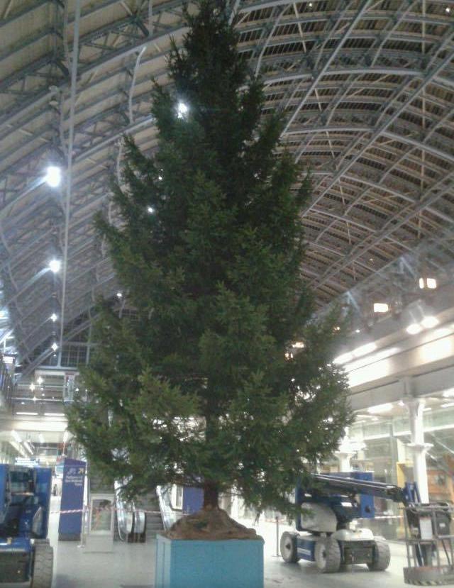 40ft Christmas Tree at St Pancras International Station flame proofed.jpg