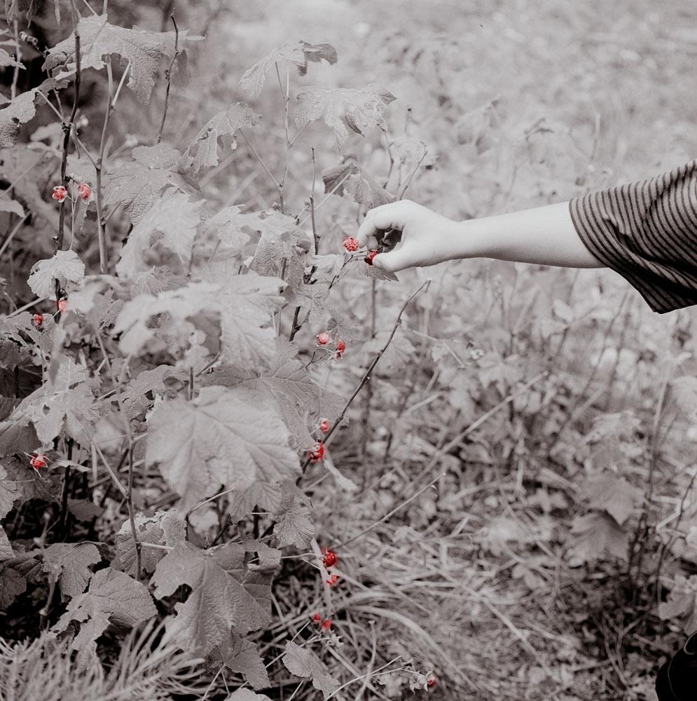 18_rasberrys.jpg