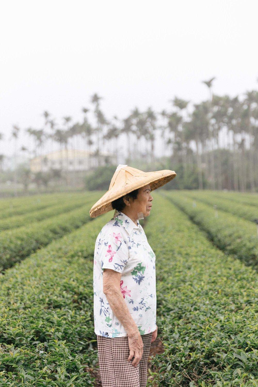 travel_photography_nantou_taiwan_teafield-2