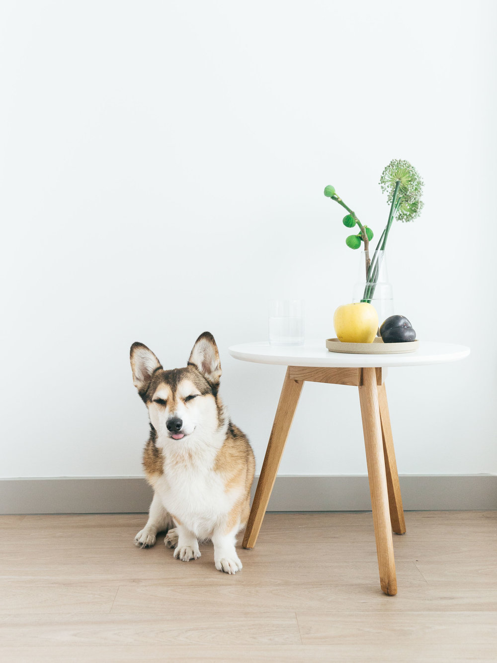 sophia_hsin_home_interior_dog
