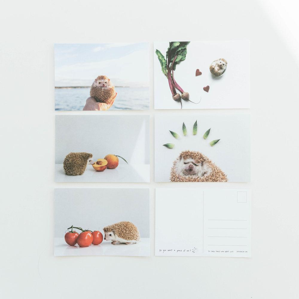 amelia_hedgehog_postcards_sophia_hsin.JPG