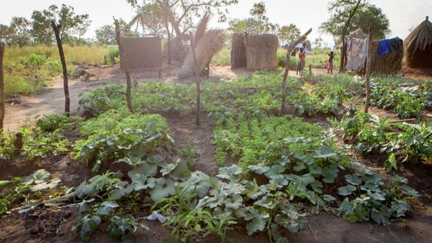 Faida Sarah has her own vegetable plot in Bidi Bidi